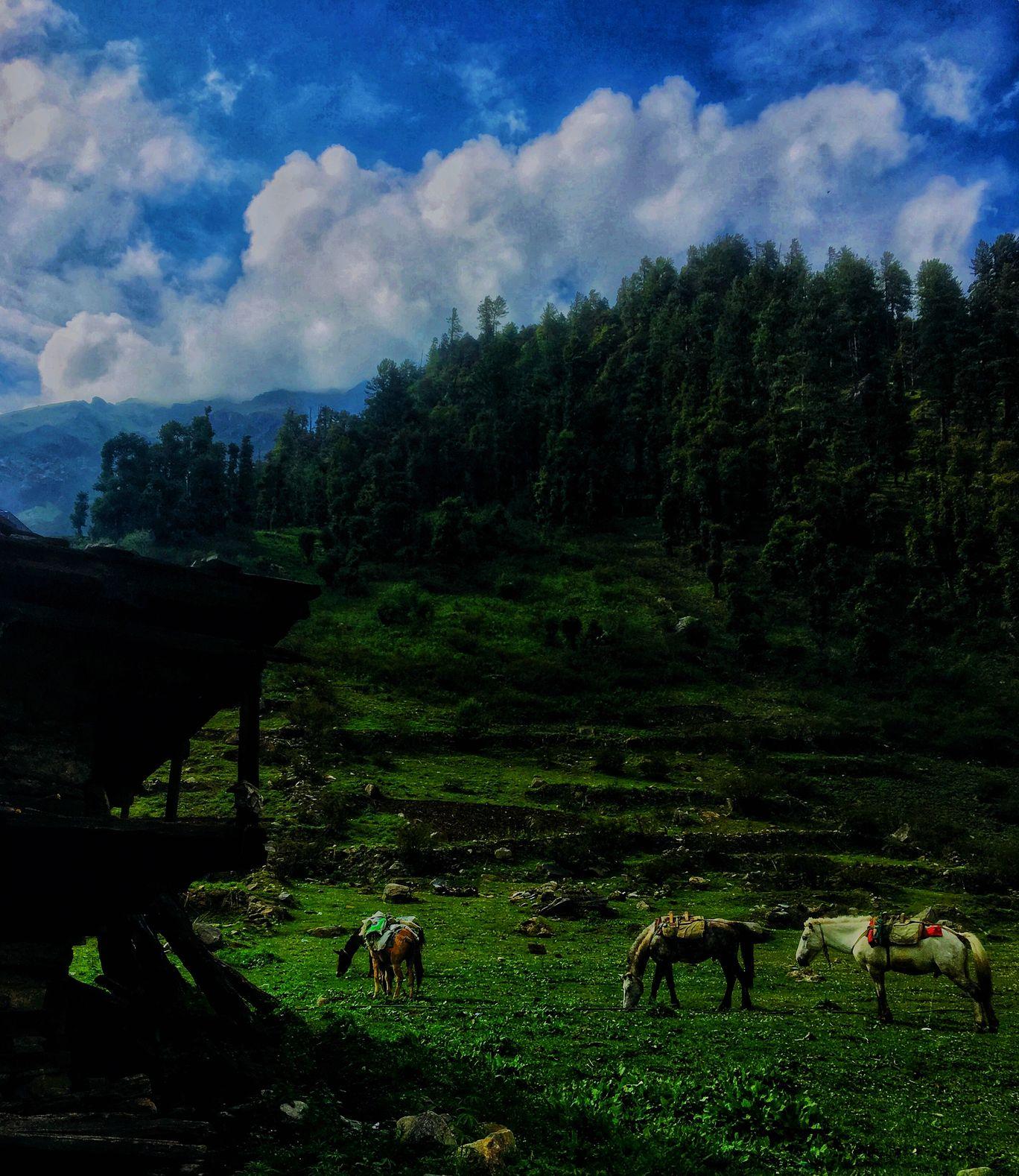 Photo of Magic Valley By Rishabh Jain