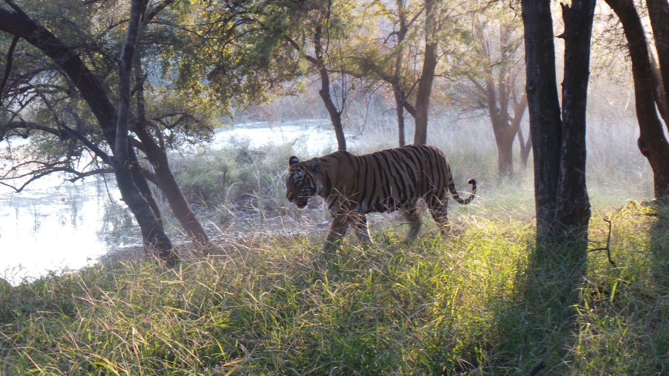 Photo of Ranthambore National Park By Rachel