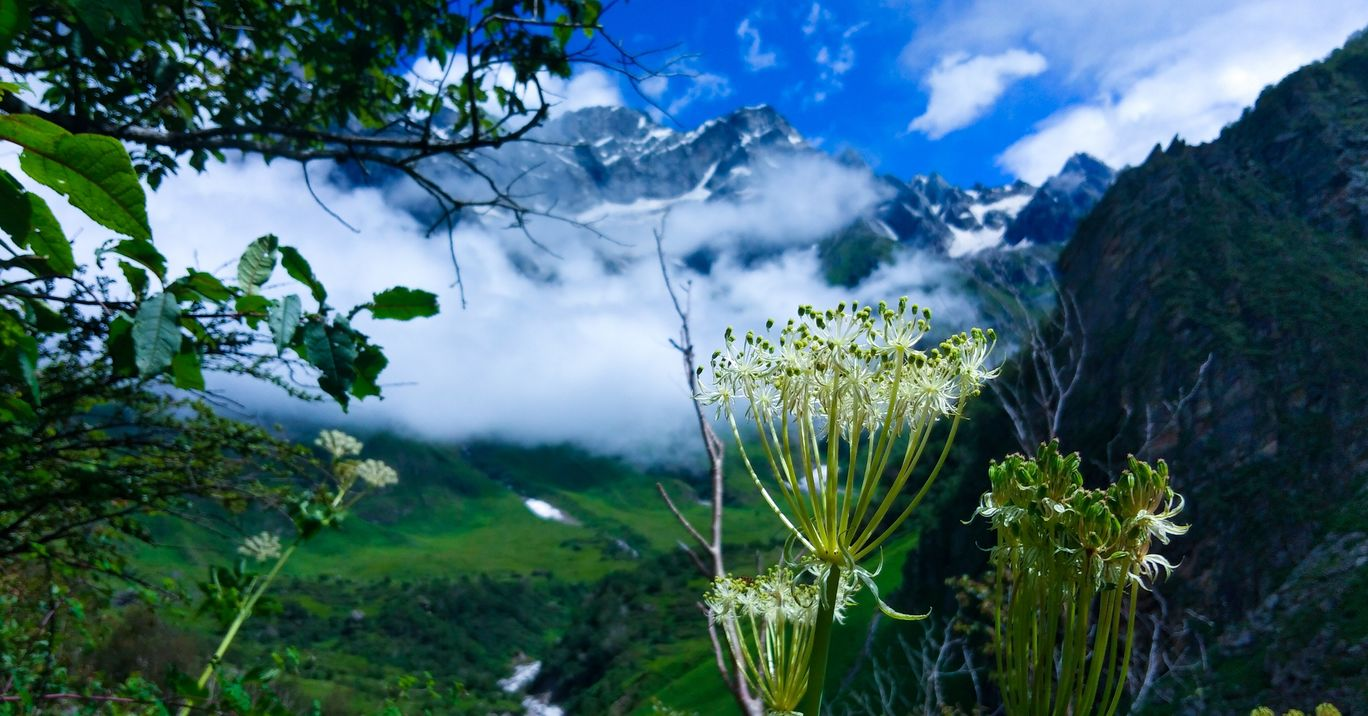 Photo of Valley of Flowers National Park By Shubham rana