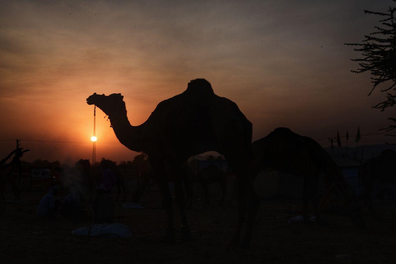 Photo of Pushkar By saurabh chauhan