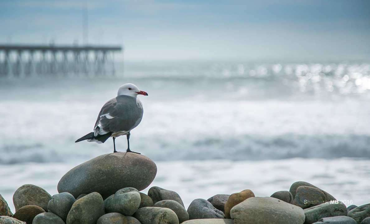 Photo of Ventura By Shashank MB