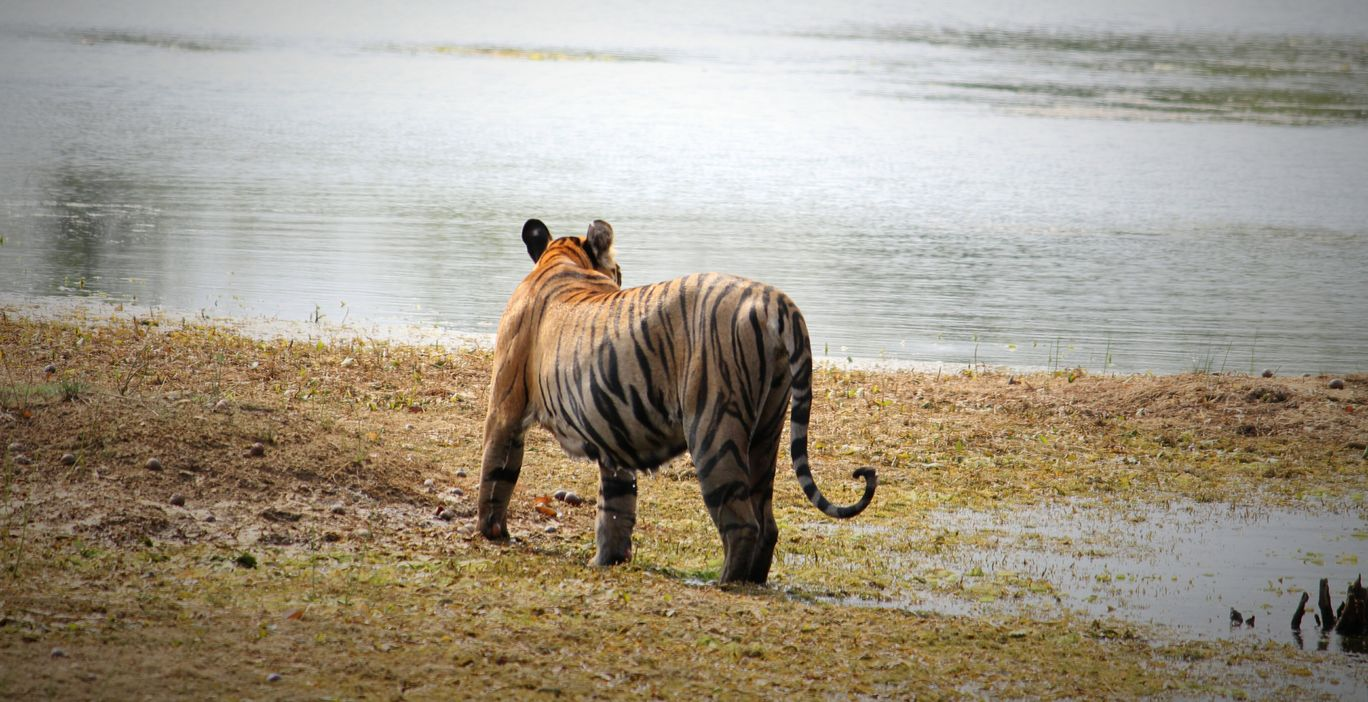 Photo of Tadoba National Park By Akash Dhotre