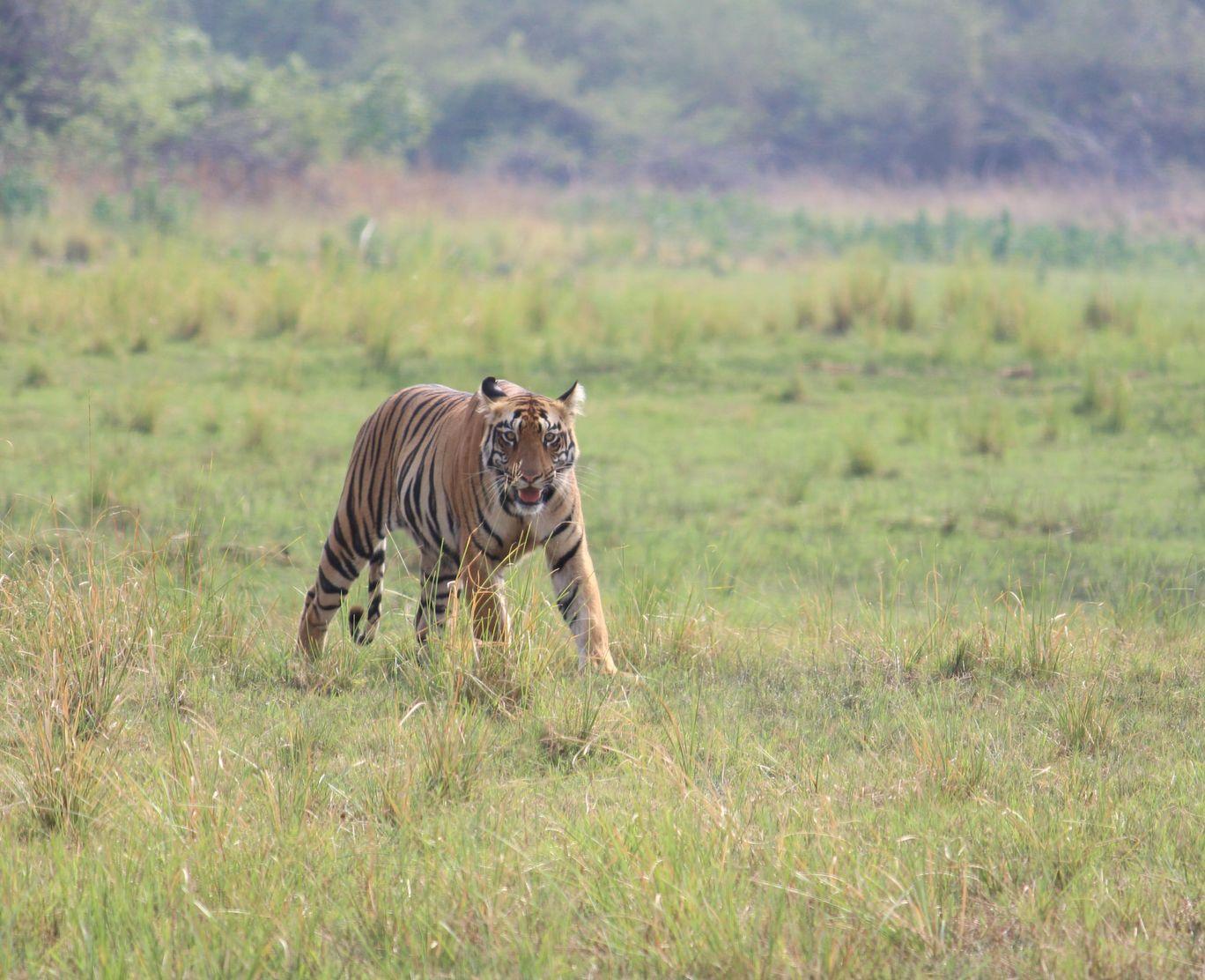 Photo of Tadoba Andhari Tiger Reserve By Akash Dhotre