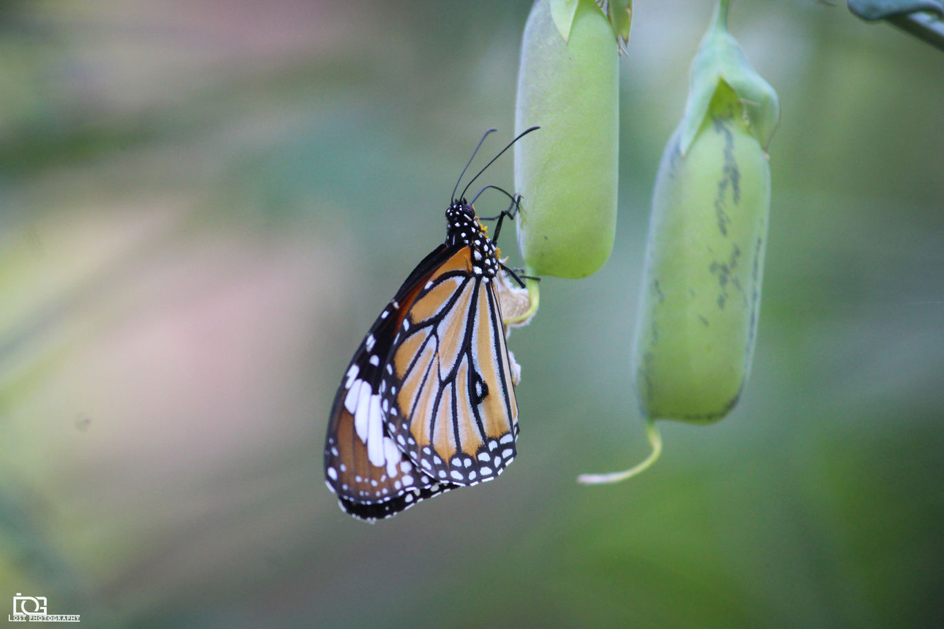Photo of Butterfly Park By Rahul K