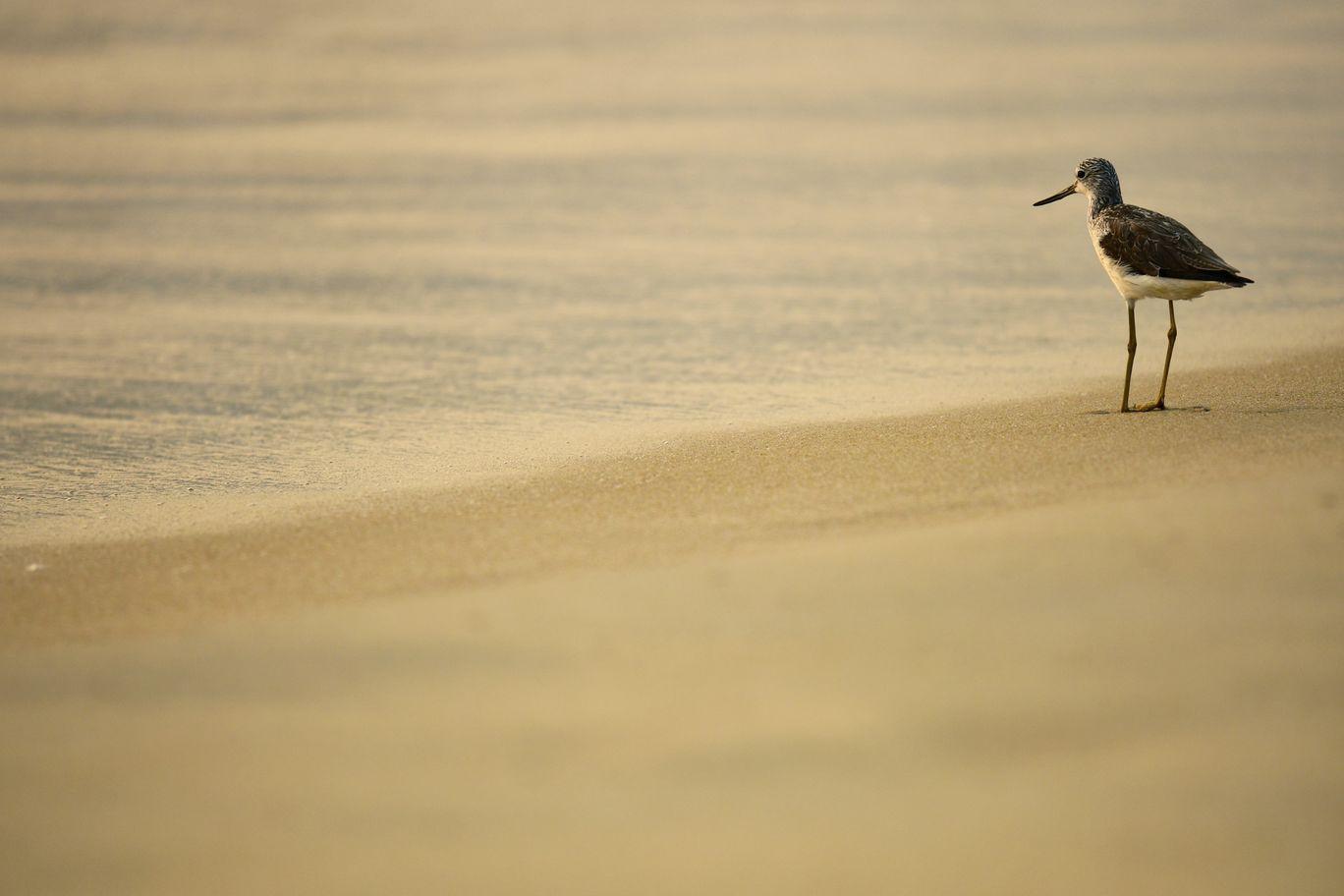Photo of Marari Beach By Aari