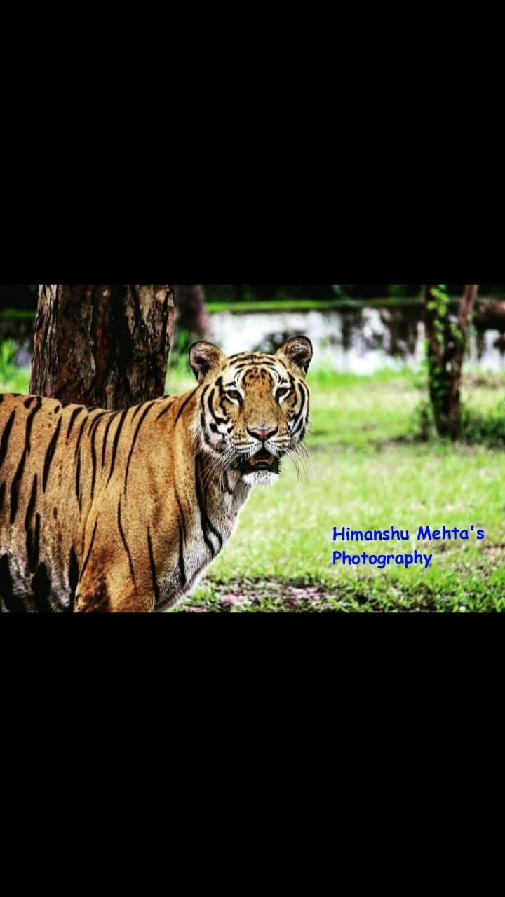 Photo of Chhatbir Zoo By Himanshu Mehta