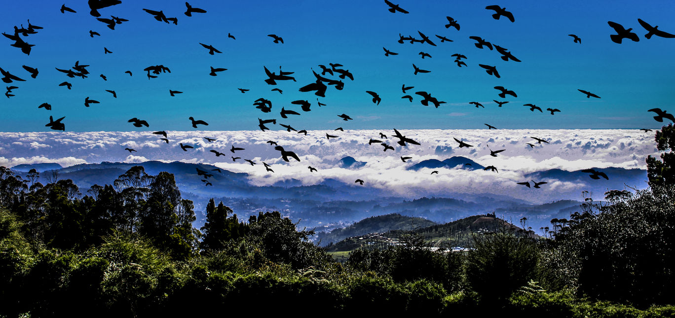 Photo of Ooty By Supratim Marik