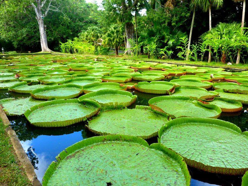 Photo of Mauritius By Varsha Suresh