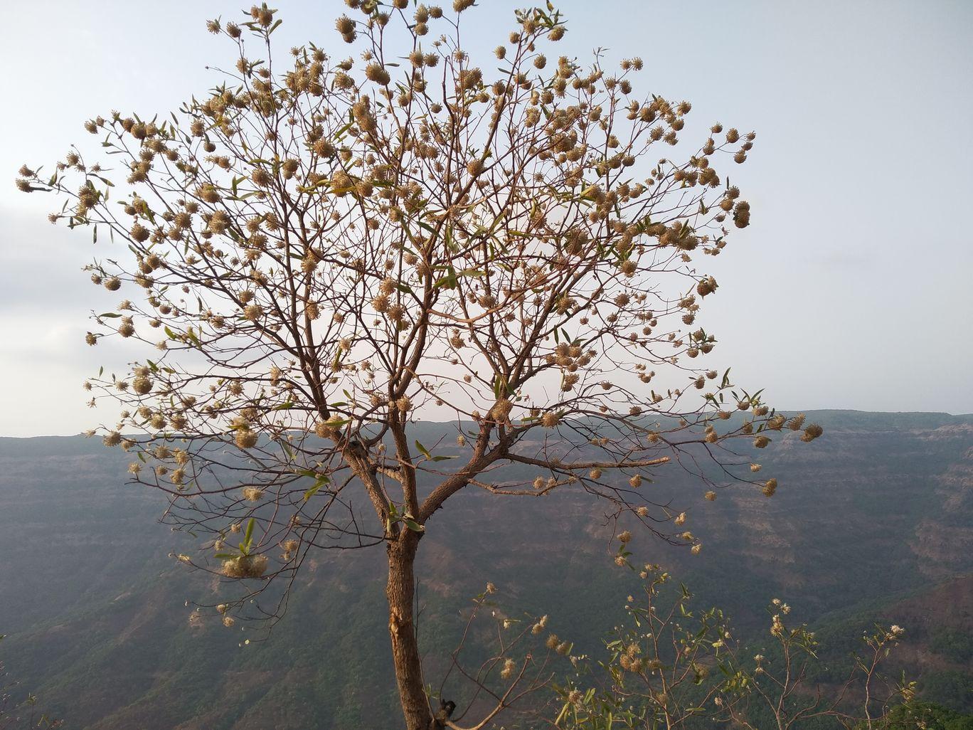 Photo of Mahabaleshwar By Hetvi Nisar