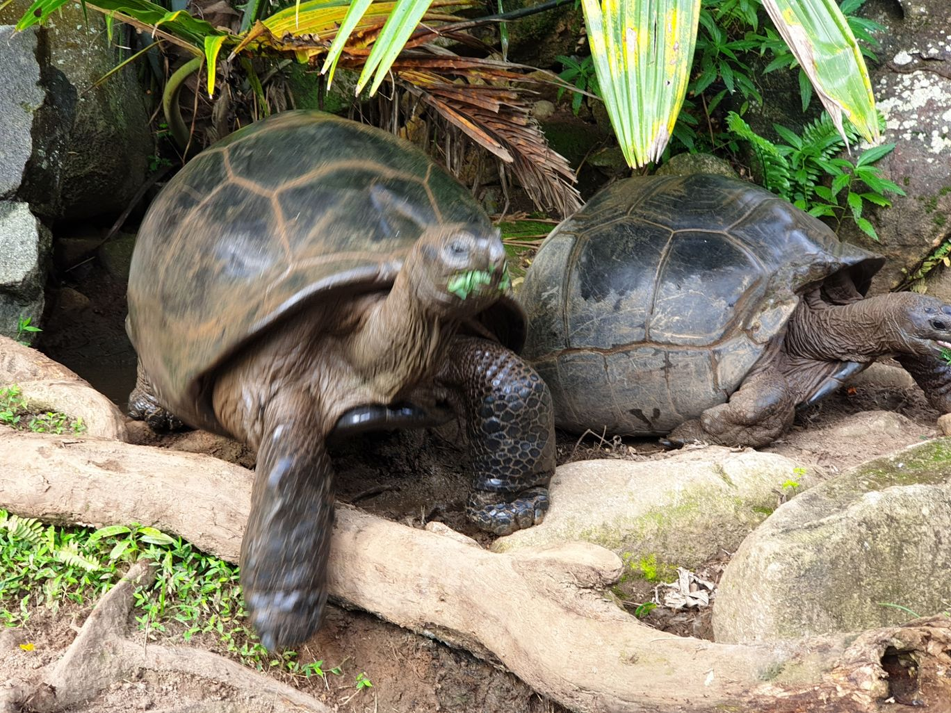 Photo of Seychelles By Pankti Shah