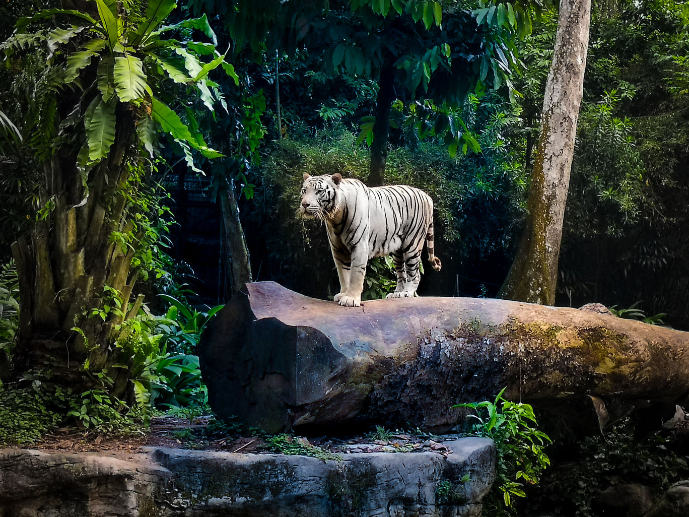 Photo of Singapore Zoo By Ankit Shrivastava