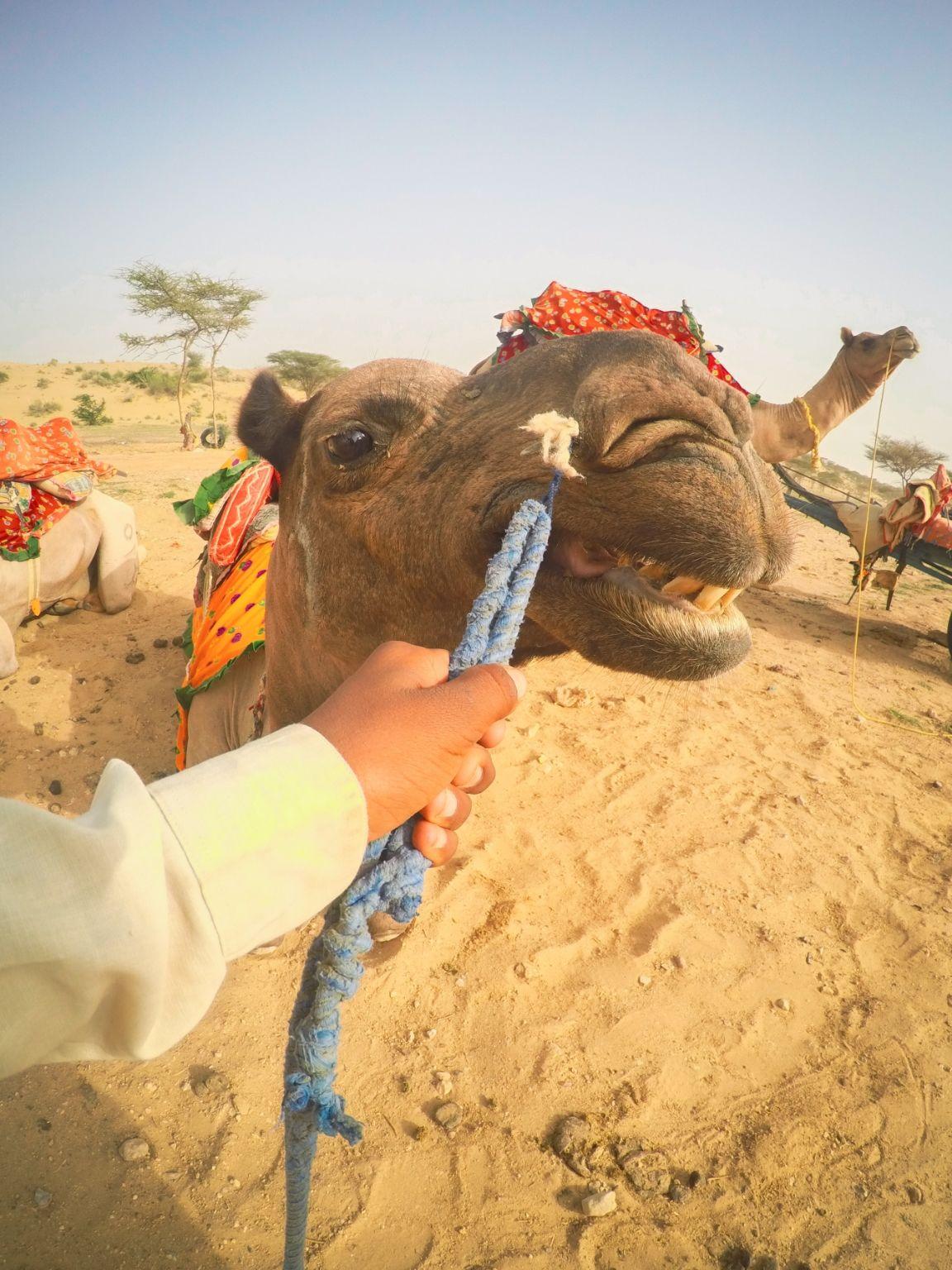 Photo of Sam Sand Dunes By Harsh Patel HP