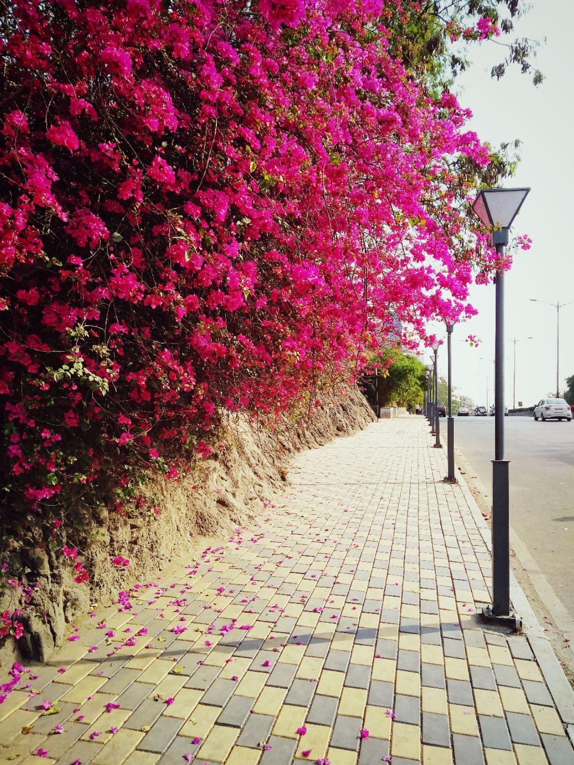 Photo of SB Road By Gauree Gandhi