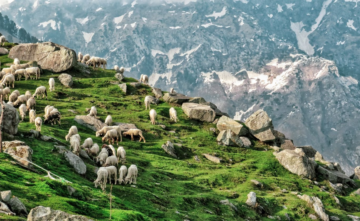 Photo of Triund By Gauree Gandhi