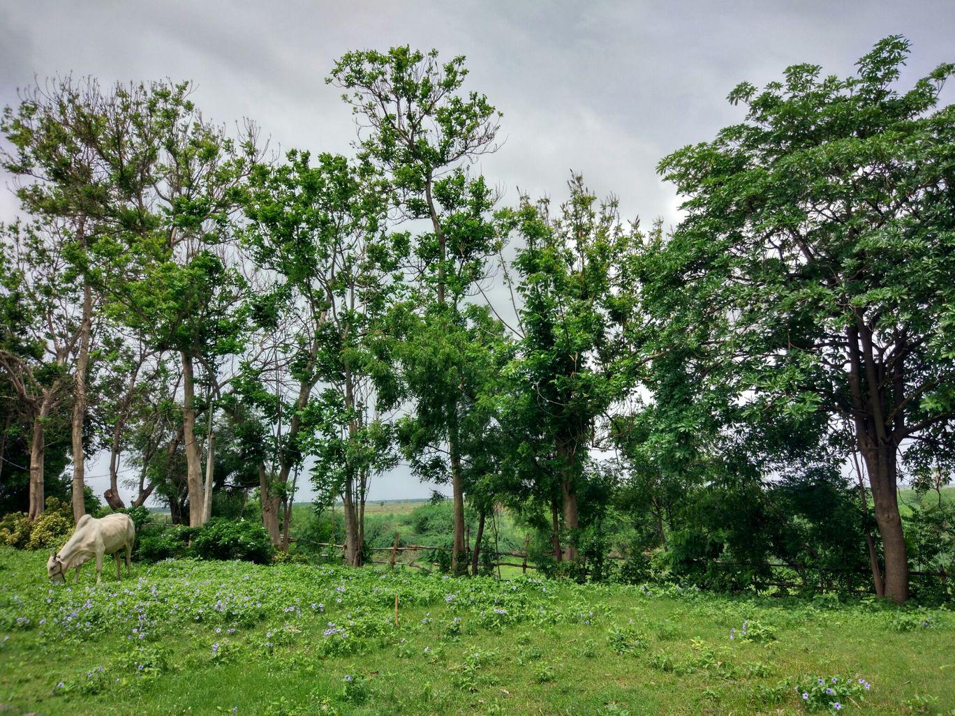 Photo of Paritala By Nagasruthi Neelam