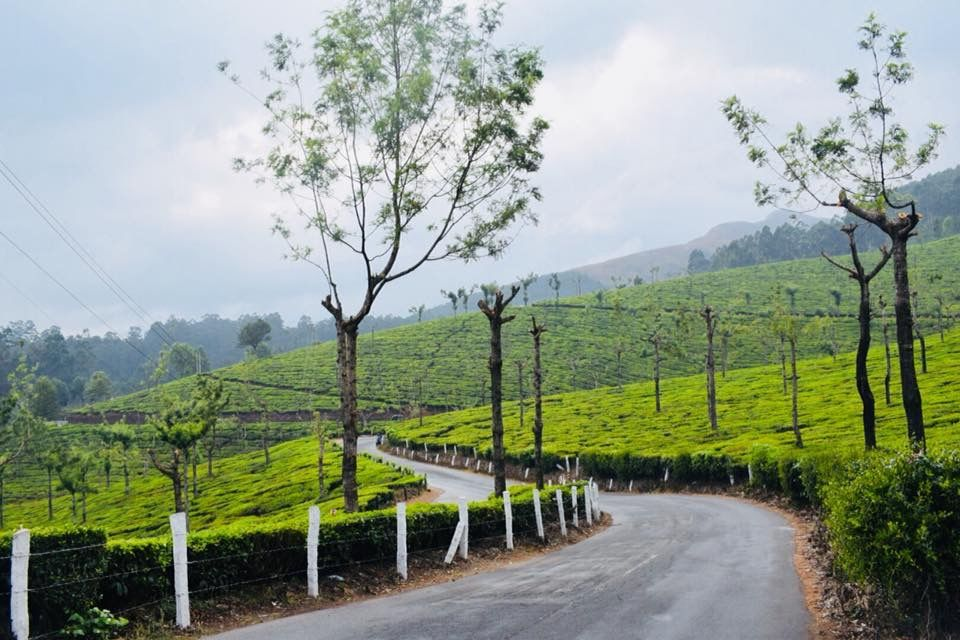 Photo of Munnar By Sanju Malhotra