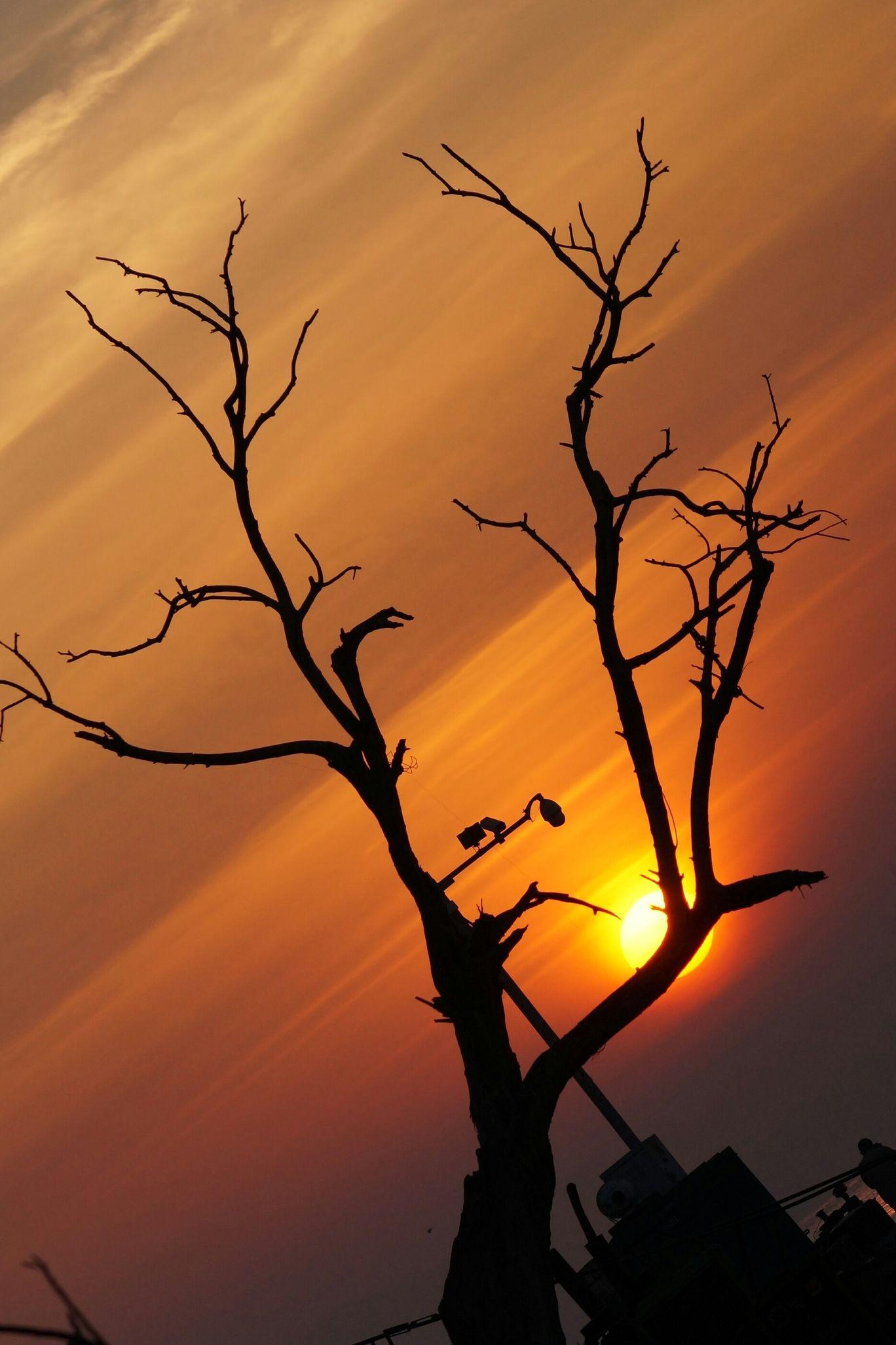 Photo of Sewri By Jignesh Patel