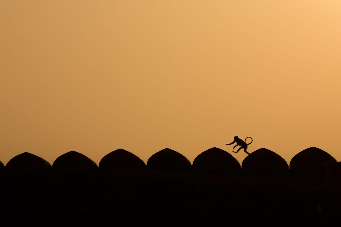 Photo of Jaipur By Sanjay Makhijani