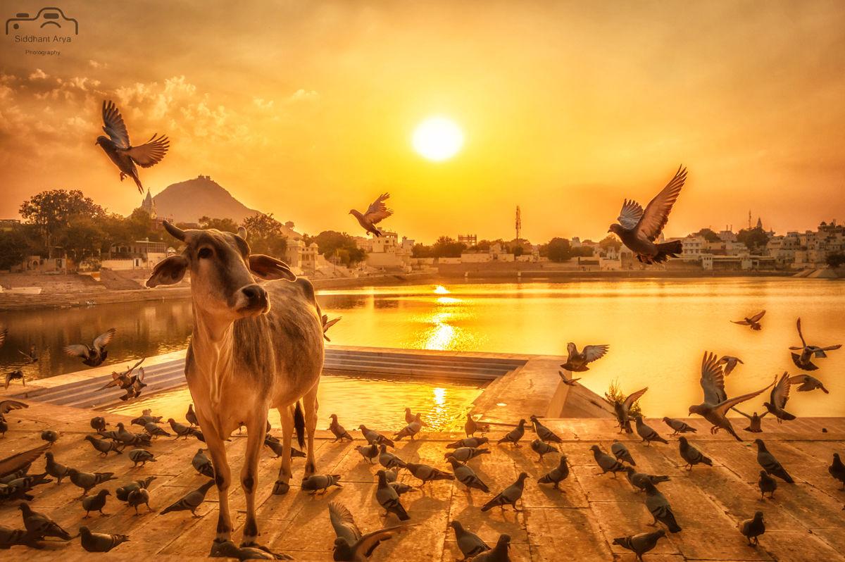 Photo of Pushkar By Siddhant Arya