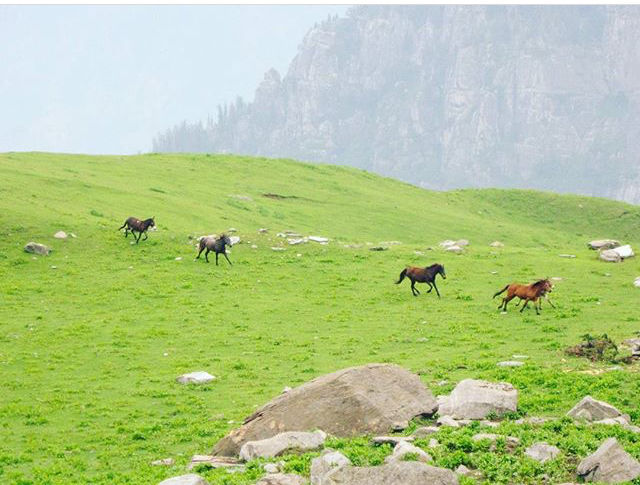 Photo of Himalayas By Dathathreya S