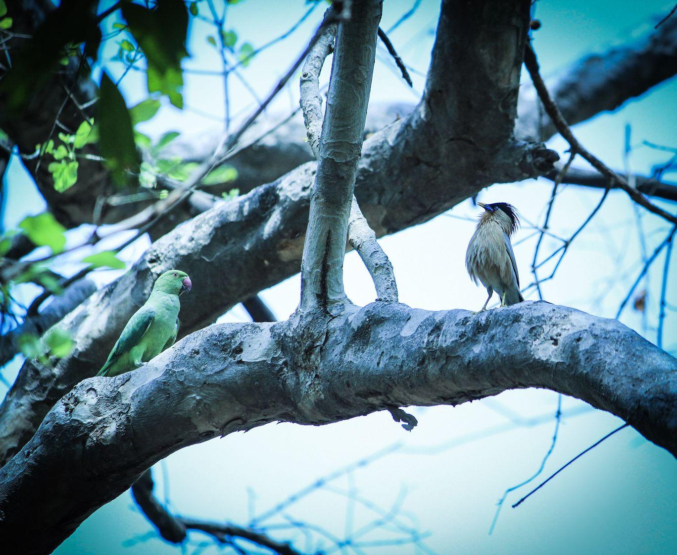 Photo of Bharatpur Bird Sanctuary By Rachit Tandon