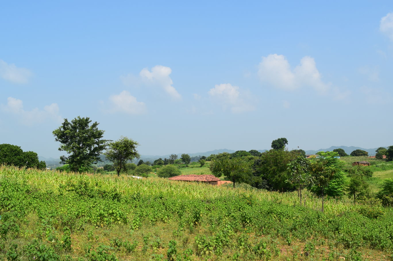Photo of Singrauli By Ruhi kumari