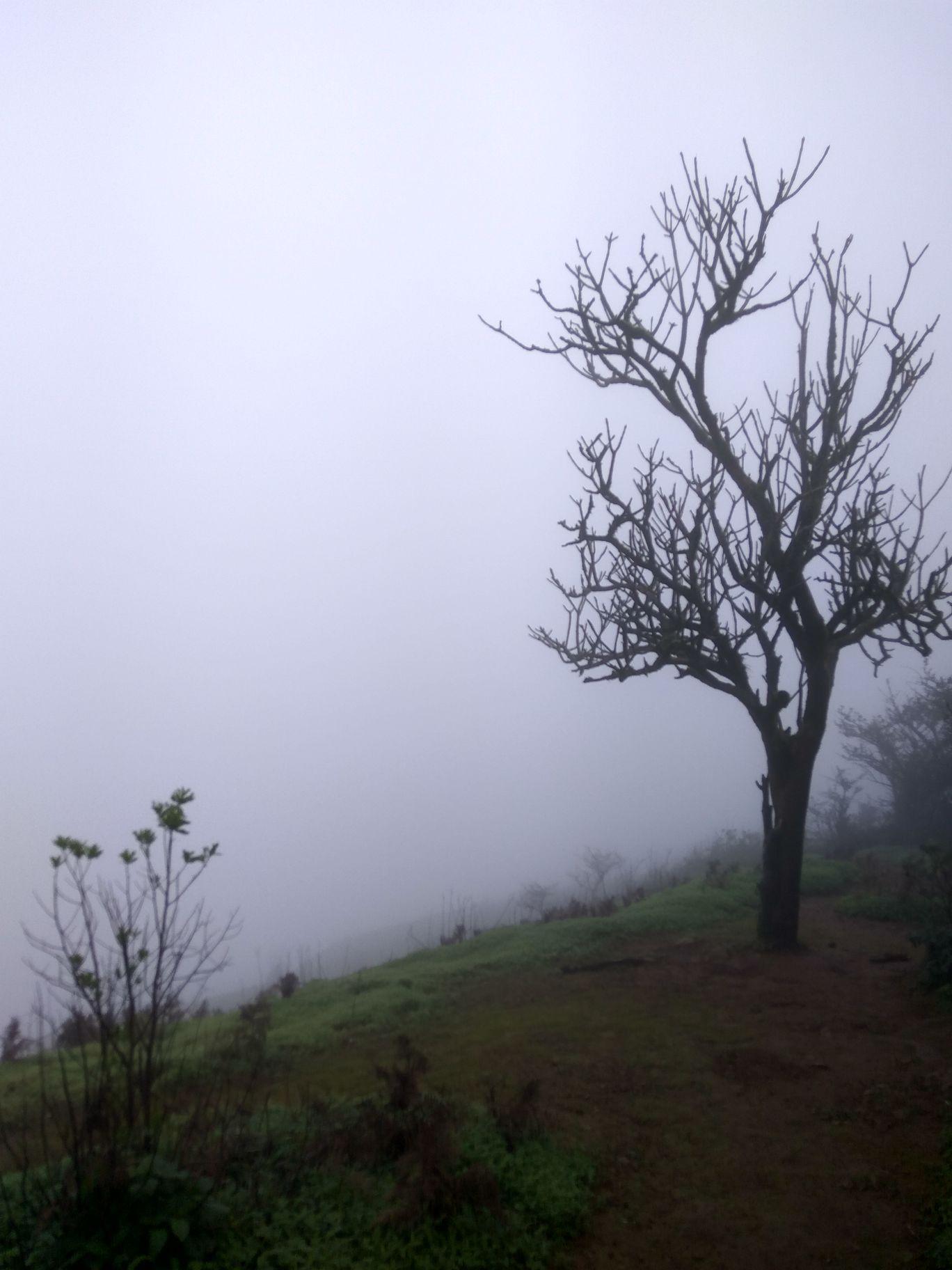 Photo of Lodwick Point Mahabaleshwar By Sneha Shinde