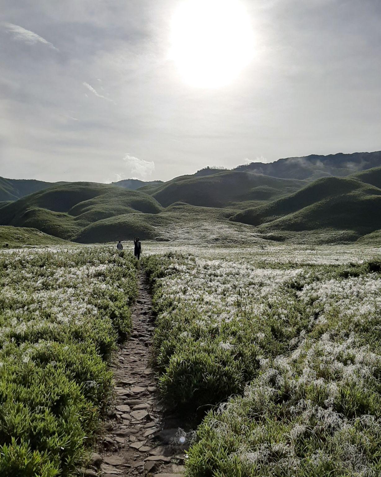 Photo of Dzükou Valley By wander_lust09