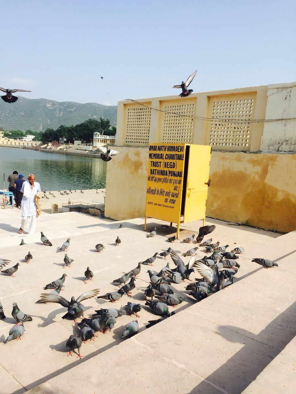 Photo of Pushkar By ijazalfa