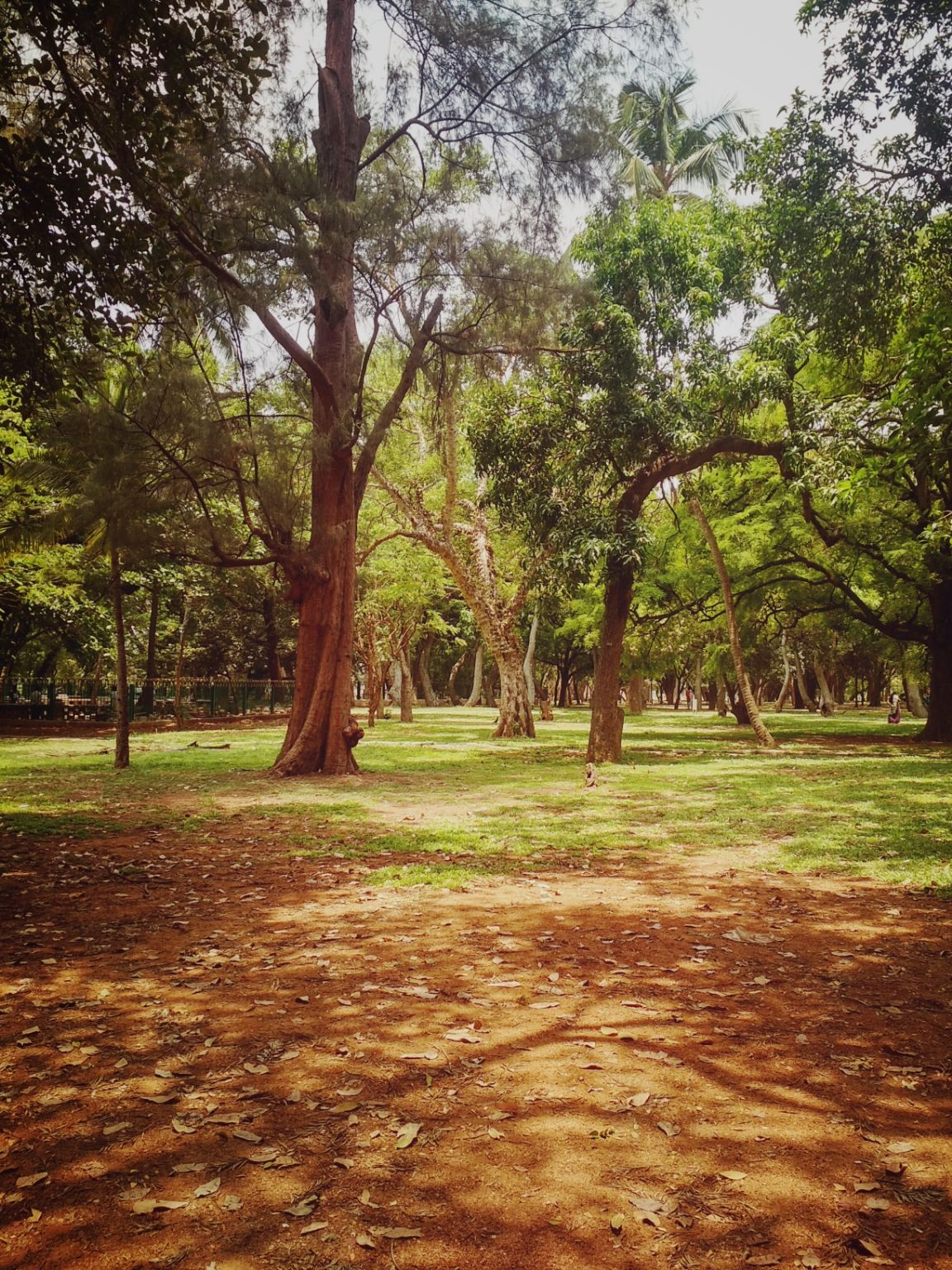 Photo of Lalbagh Botanical Garden By Smash