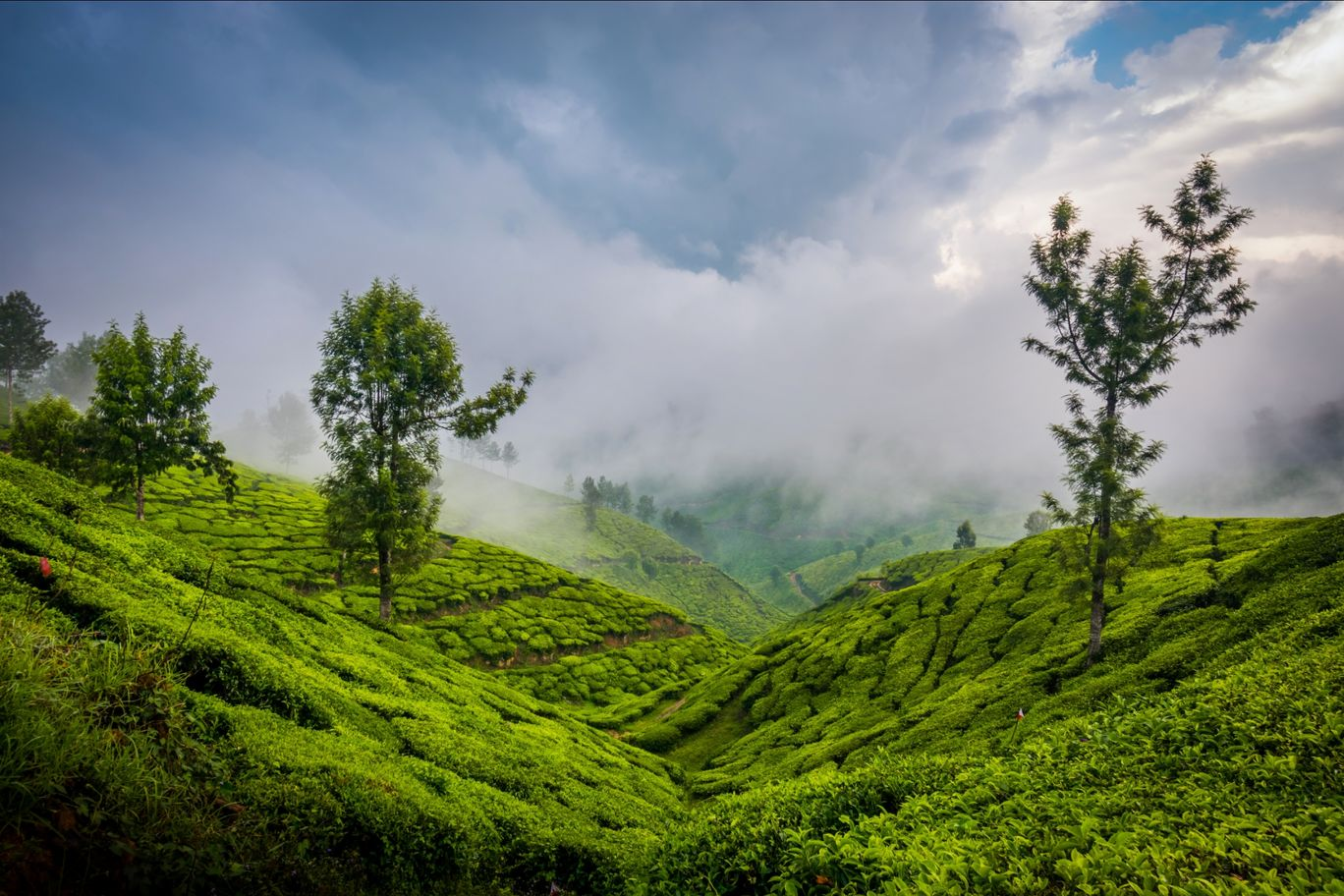 Photo of Munnar By Rishab Tripathy