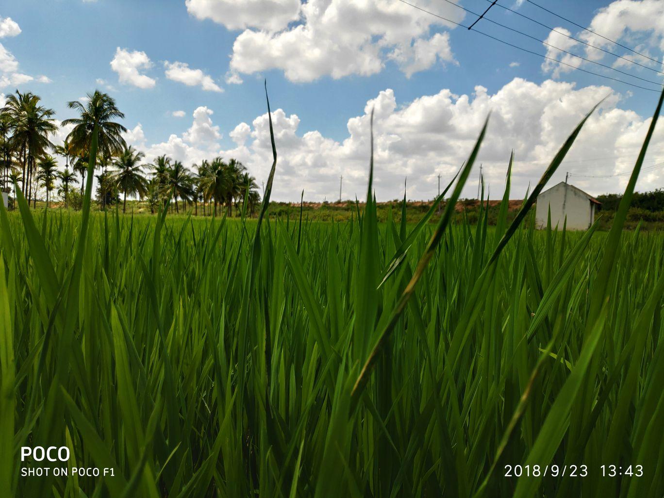 Photo of Tiptur By Guru Kiran