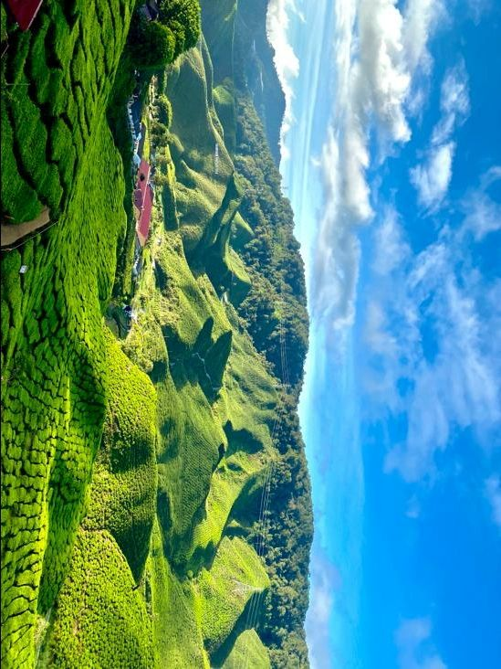 Photo of Cameron Highlands By Mukesh Reddy