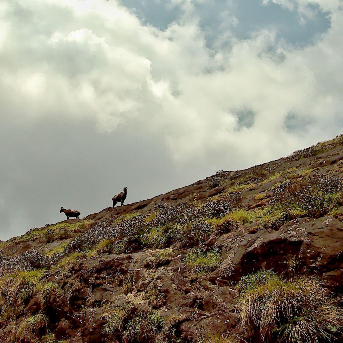 Photo of Eravikulam National Park Road By Binil Varghese