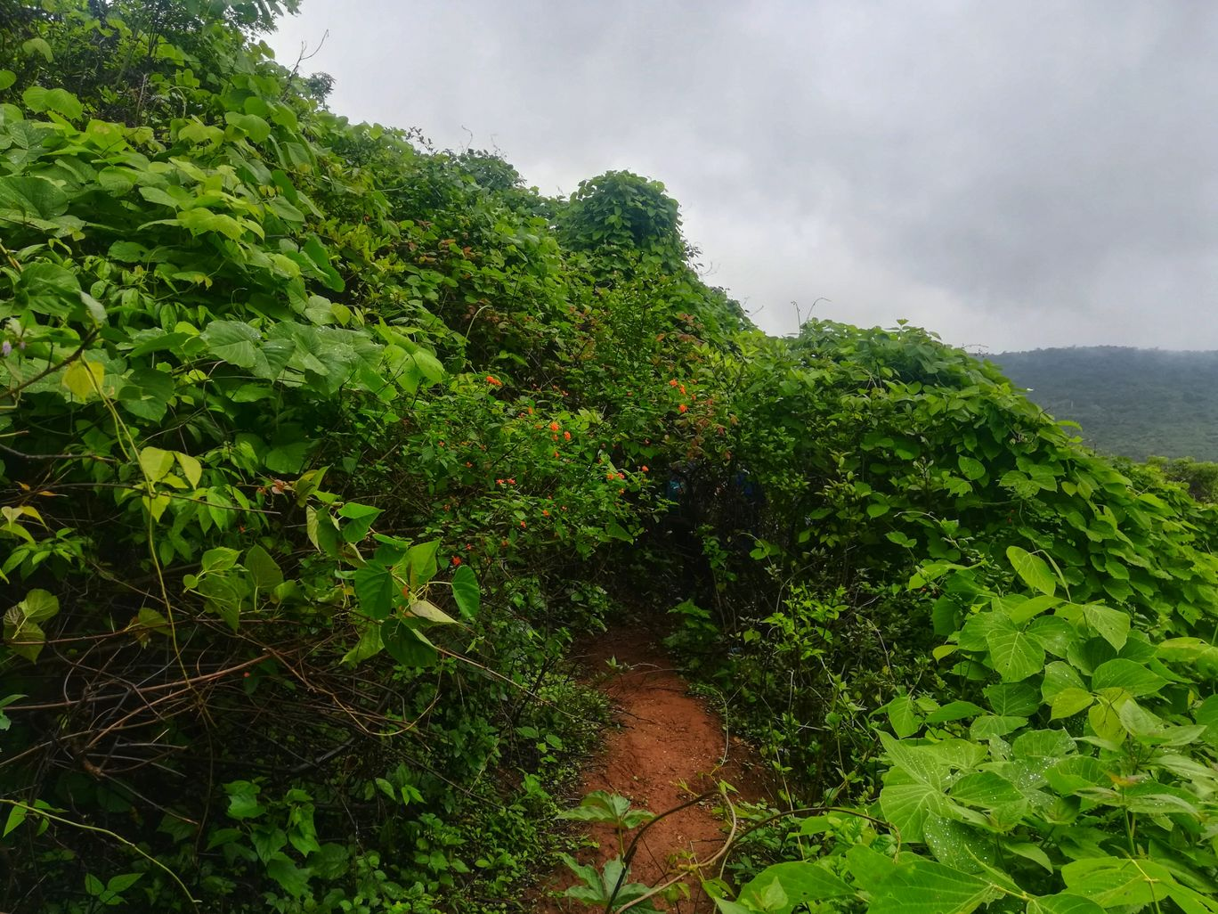 Photo of Lohgad Fort By Snaked