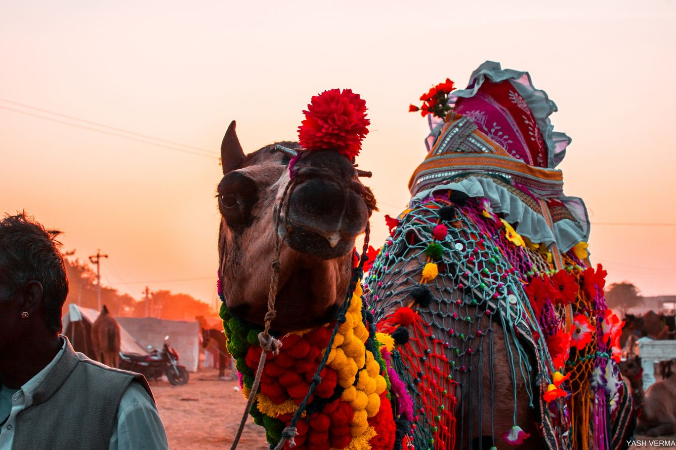 Photo of Pushkar By luminescence capture (Yash)