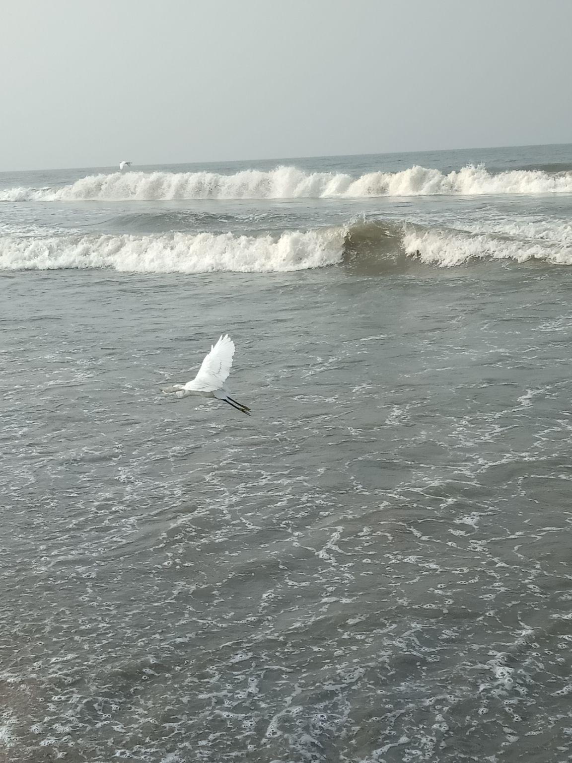 Photo of Kozhikode Beach By Balendu S Kumar
