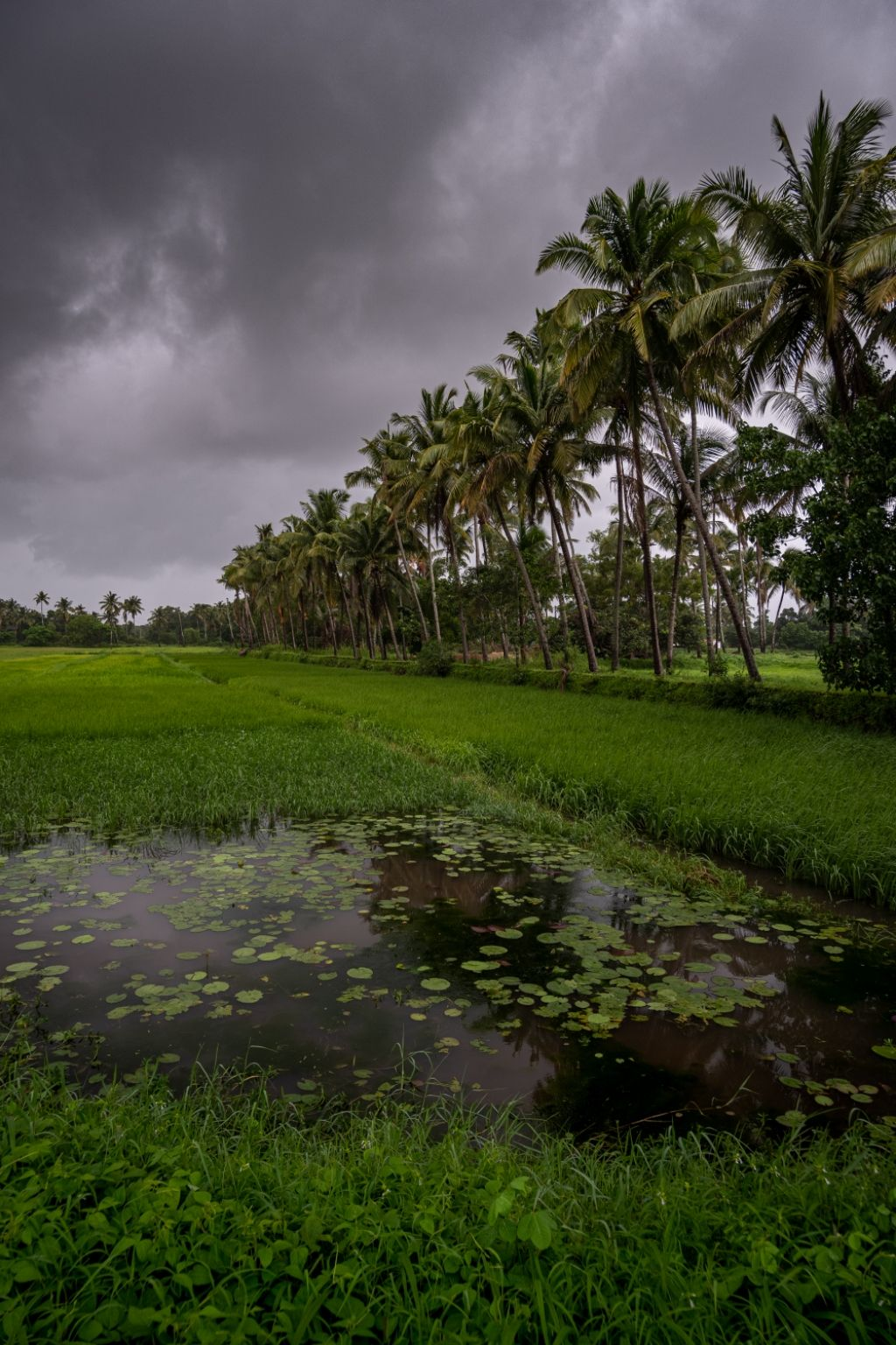 Photo of Varca By Sheldon Rodrigues