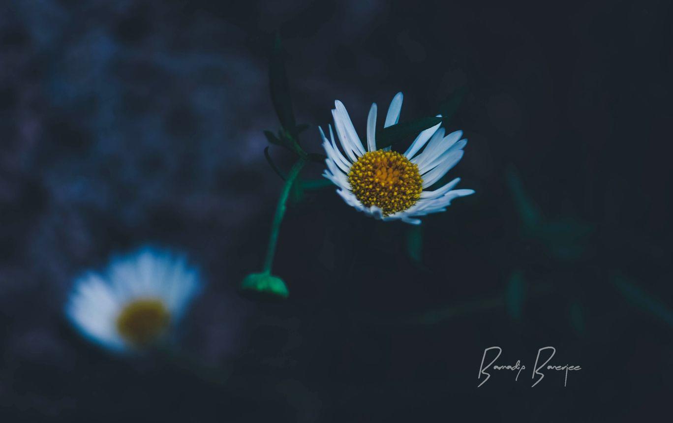 Photo of Shillong By Barnadip Banerjee