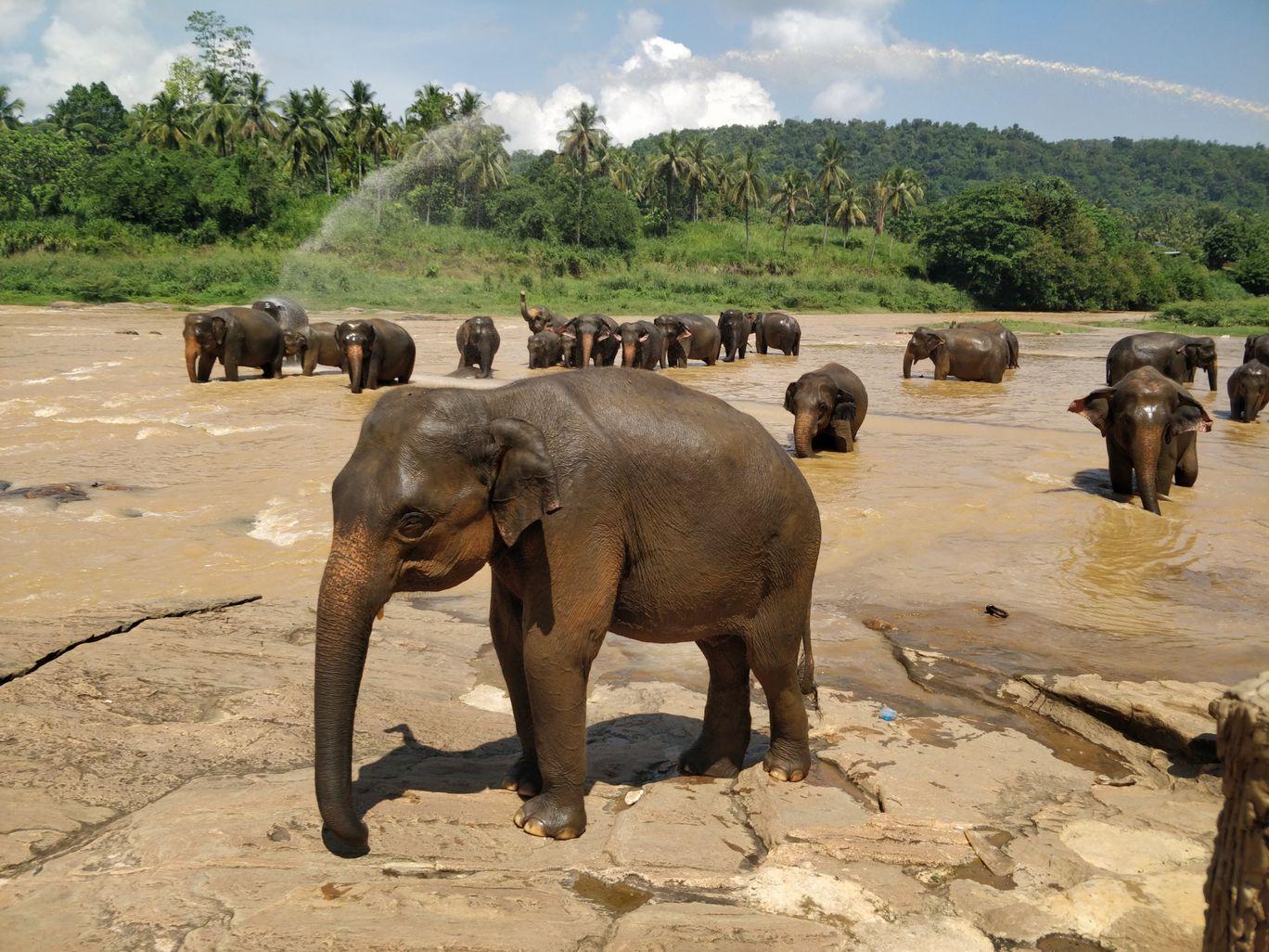 Photo of Sri Lanka By Malika Bhavnani
