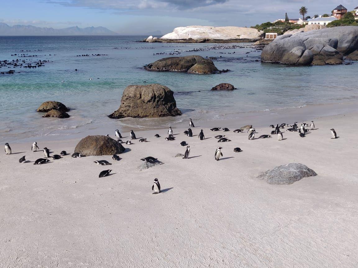 Photo of Boulders Penguin Colony By Malika Bhavnani