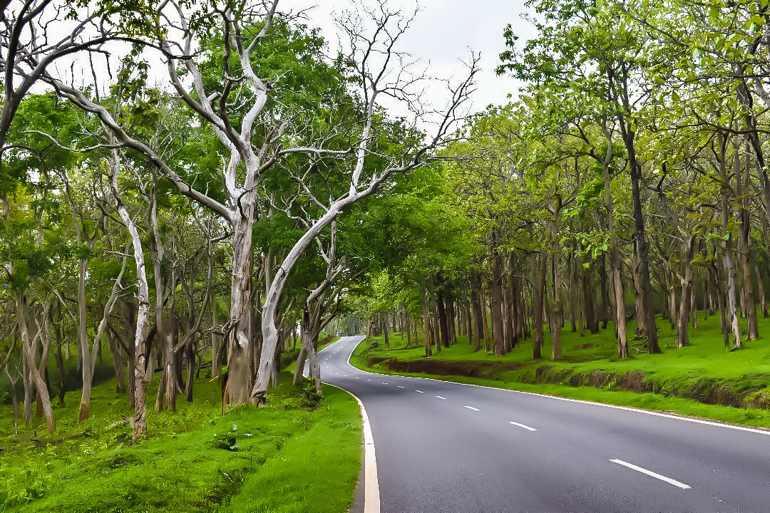 Photo of Bandipur By Chaithra Shetty