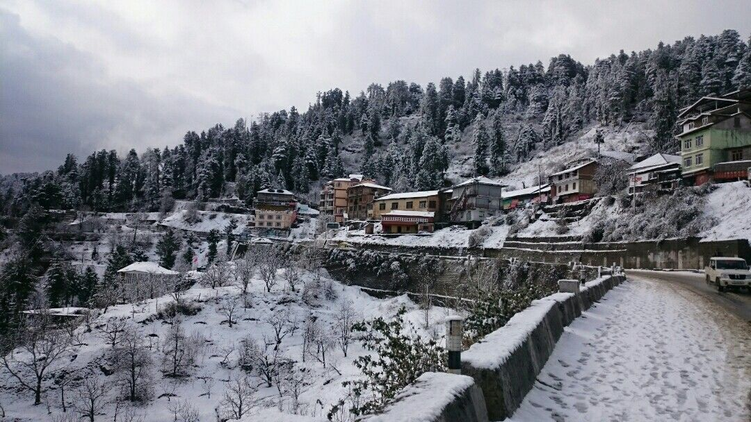 Photo of Kufri - Chail Road By Divyank Kushwaha