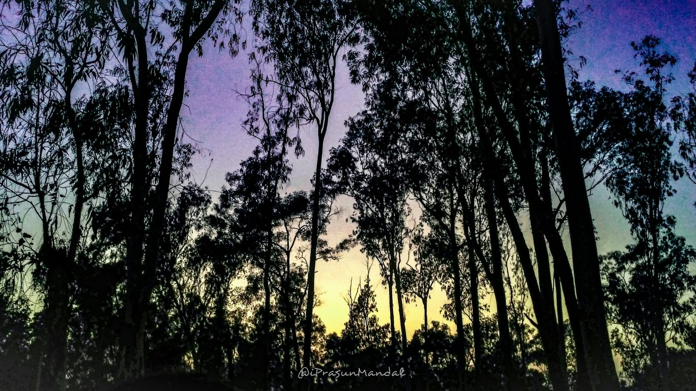 Photo of Sonajhuri Forest By Prasun Mandal