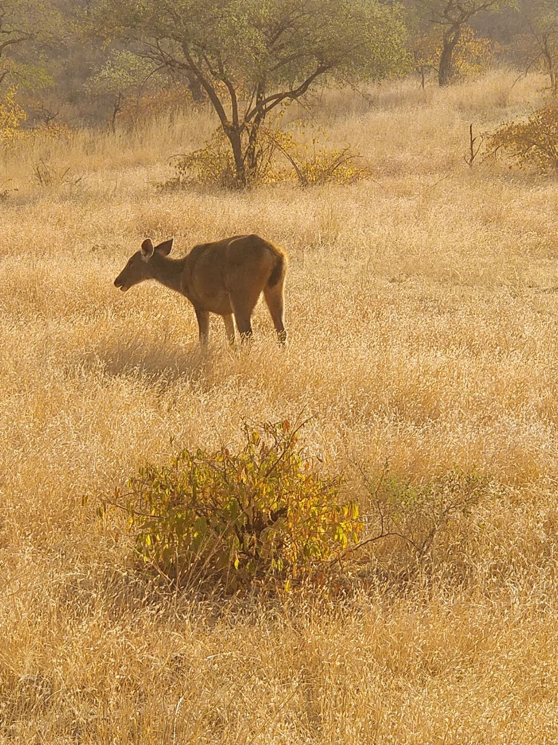 Photo of Ranthambore Tiger Reserve By FoodieNimba