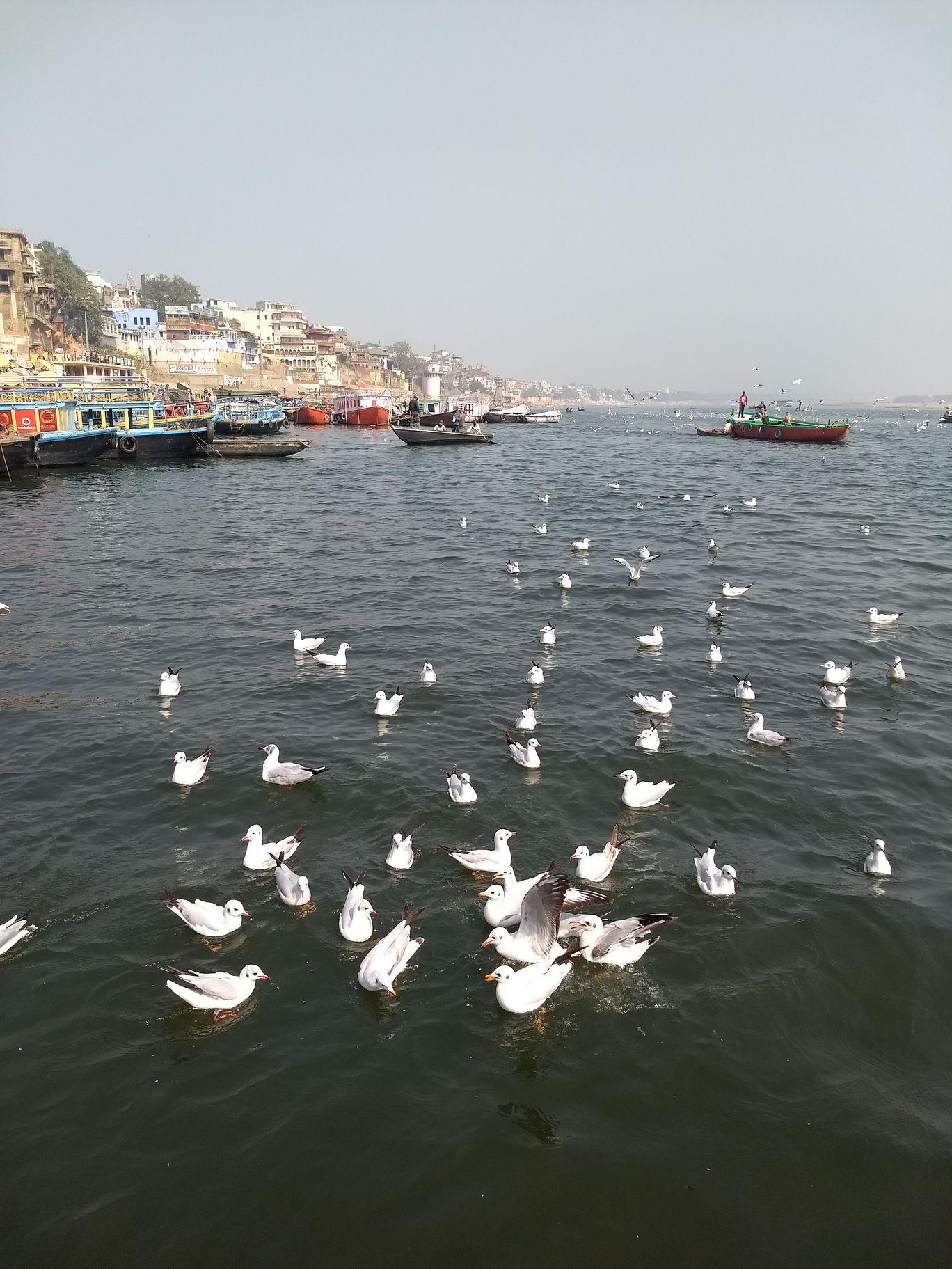 Photo of Varanasi By Gourav Jain