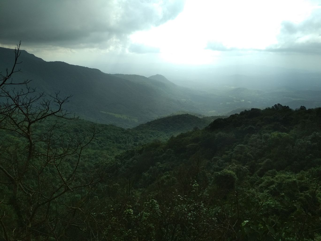 Photo of Amboli By Anurag Kasaudhan