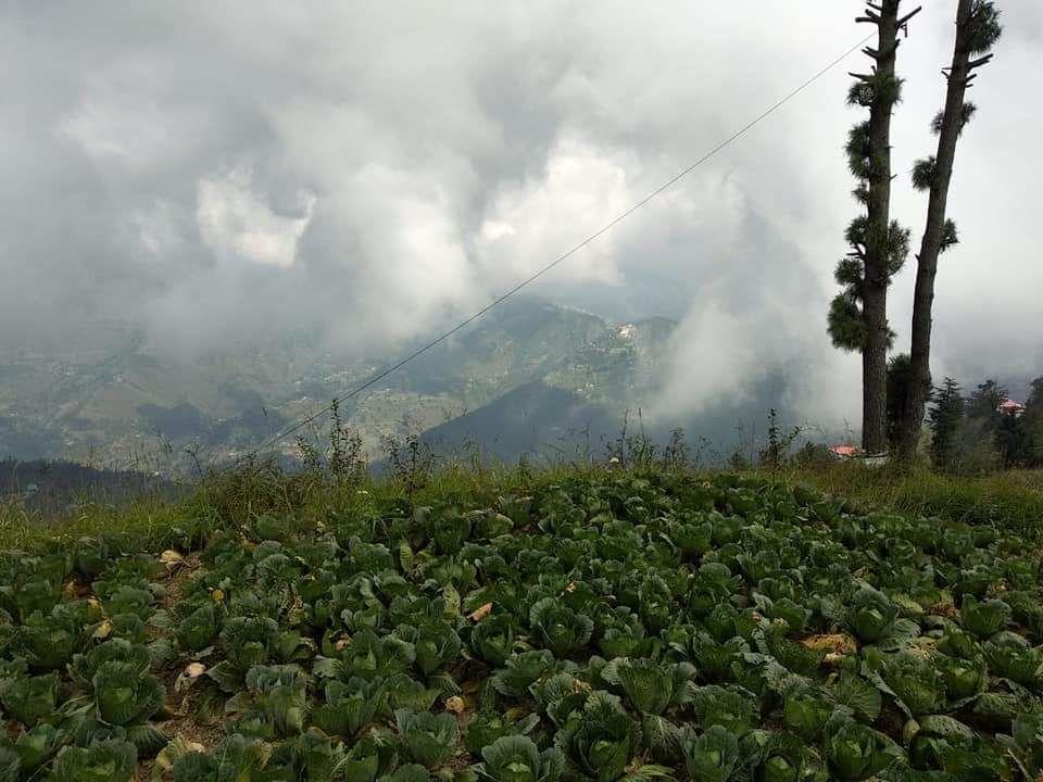 Photo of Shimla By Pragati Avinash Sharma