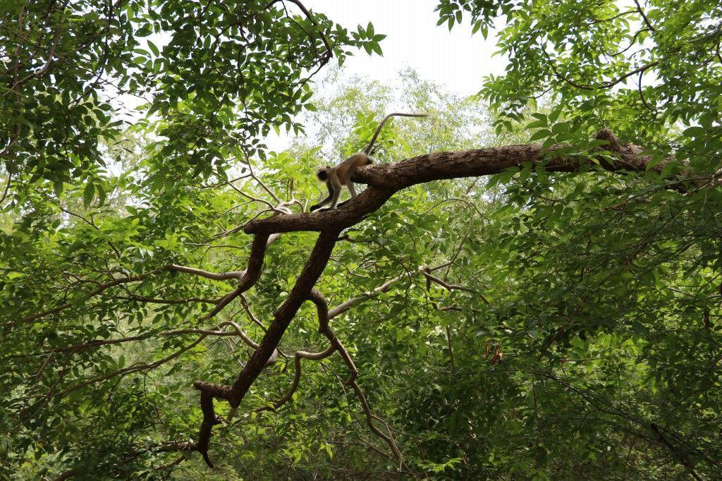 Photo of Jessore Sloth Bear Sanctuary By Karan Prajapati
