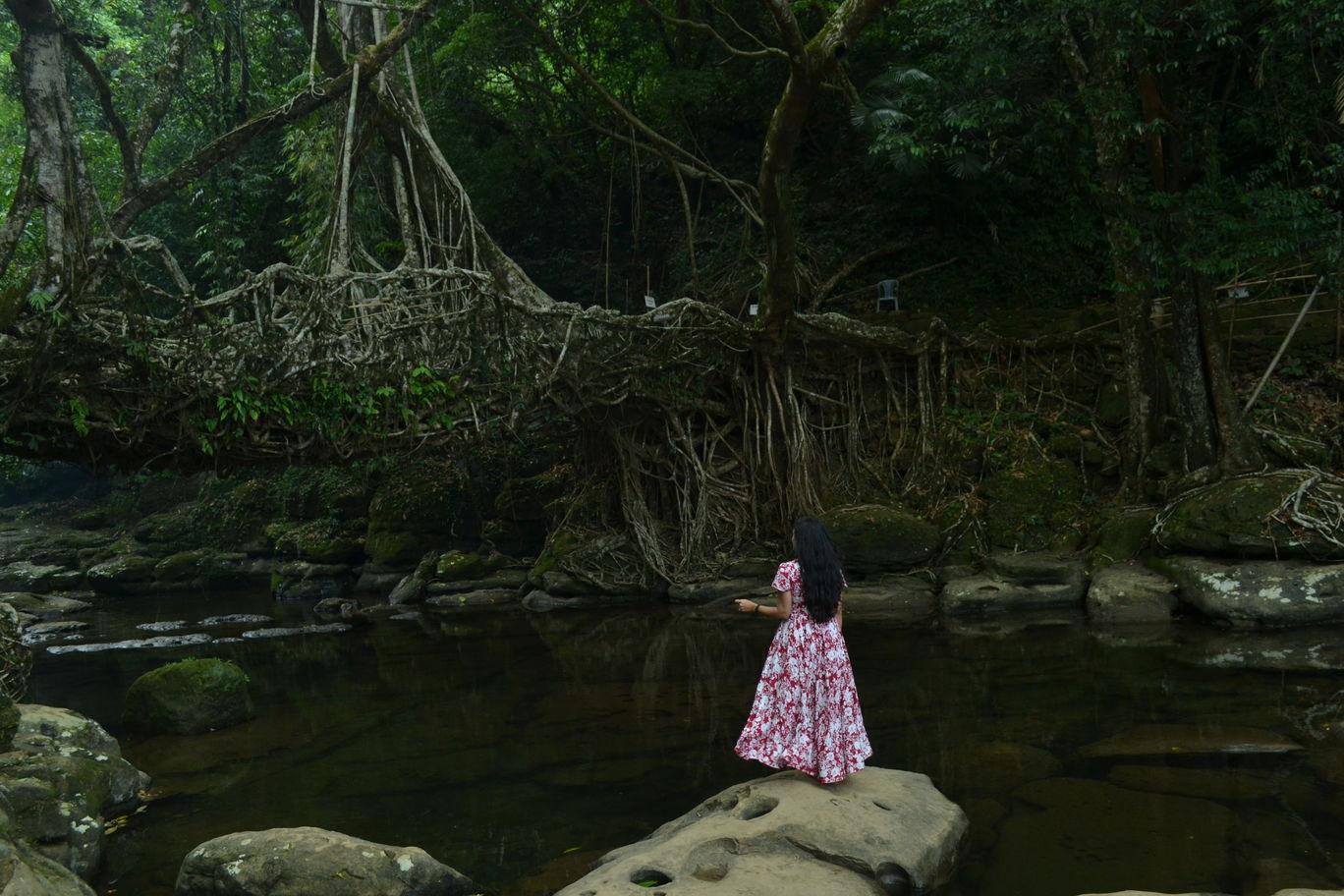 Photo of Living Root Bridge By Ishita T